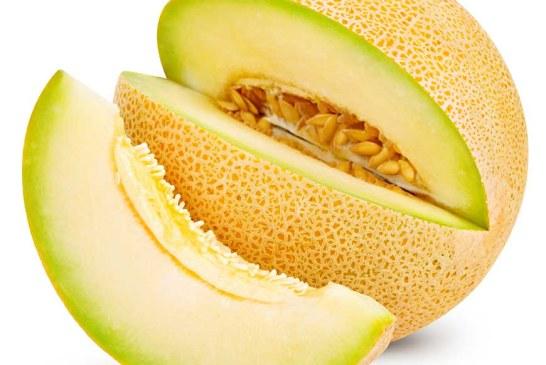 Maraîchage : Melon au Maroc 2017, le marché local