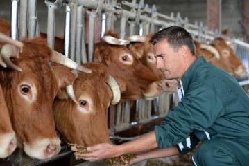 INSECTES: Alimentation animale du futur ?