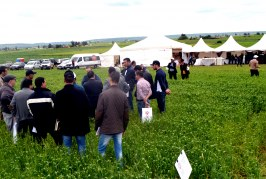 Plate-forme céréales Promagri – Dow AgroSciences