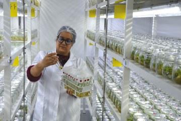 PALMAGRO, un laboratoire de pointe au service de la phoeniciculture marocaine